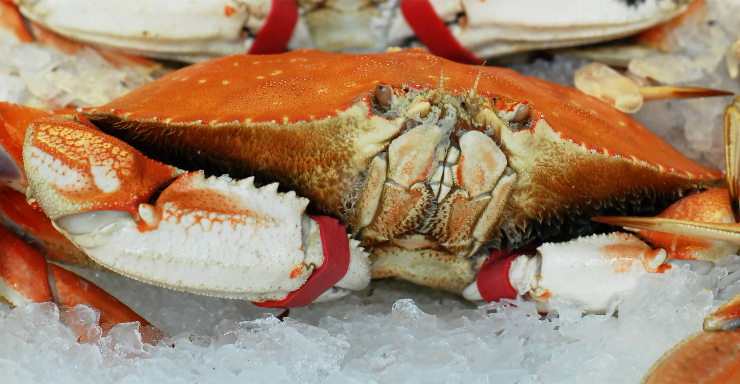 2nd Annual Dungeness Crab Season Family Gathering - Quality