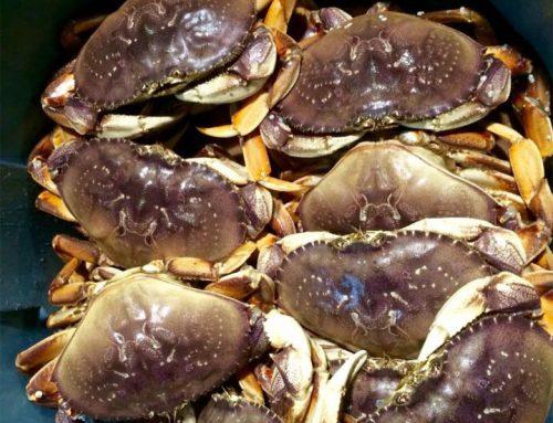 Inaugural California Dungeness Crab Season Celebration